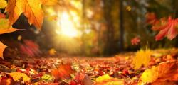 Article photo - Songs for Smoky Autumn Evenings and Indigo Night Skies: A Playlist