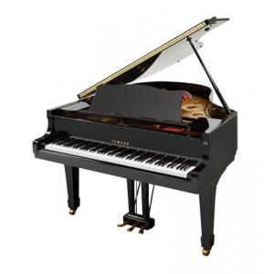 """Take the """"IS IT GOOD FOR ME"""" test for """"Yamaha G2E Grand Piano used, Black"""", read the reviews and join the community!"""